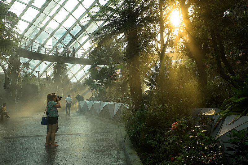 Sunset inside Cloud Forest with the X100S (Photo by David)